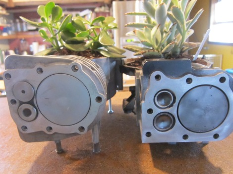 Lrg Jade and Panda Plant